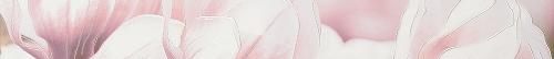 Бордюр   Rapsodia violet