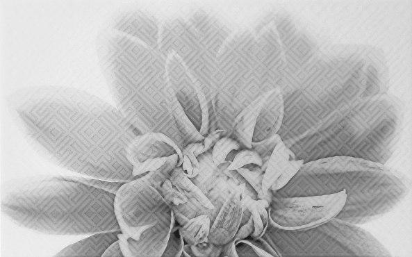 Камелия чёрный декор 03